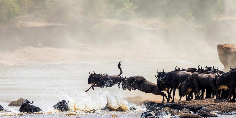jt-safaris-julius-t-safaris-wildebeest-14